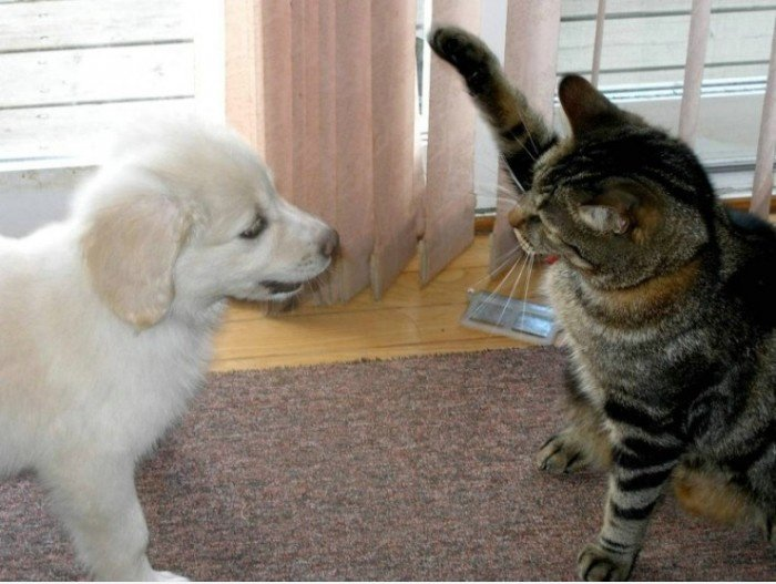 Nazi Cat? | mein-Fun.com - lustige Bilder, lustige Videos