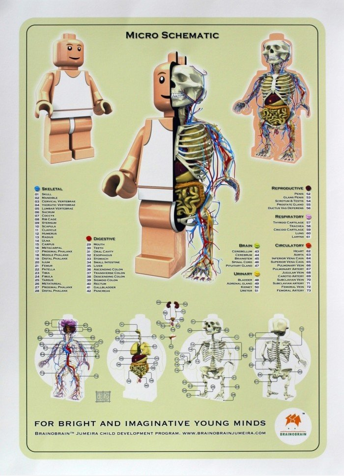Anatomy of Lego Man