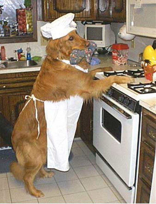 Cooking Doggie