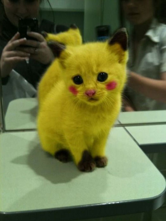 pikachu cat | mein-Fun.com - lustige Bilder, lustige Videos, Games ...