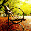 through the park benches