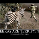 zebras are terifying